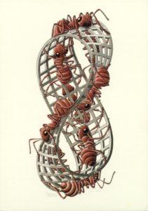 Striscia di Möbius II, xilografia a tre colori. 1963.